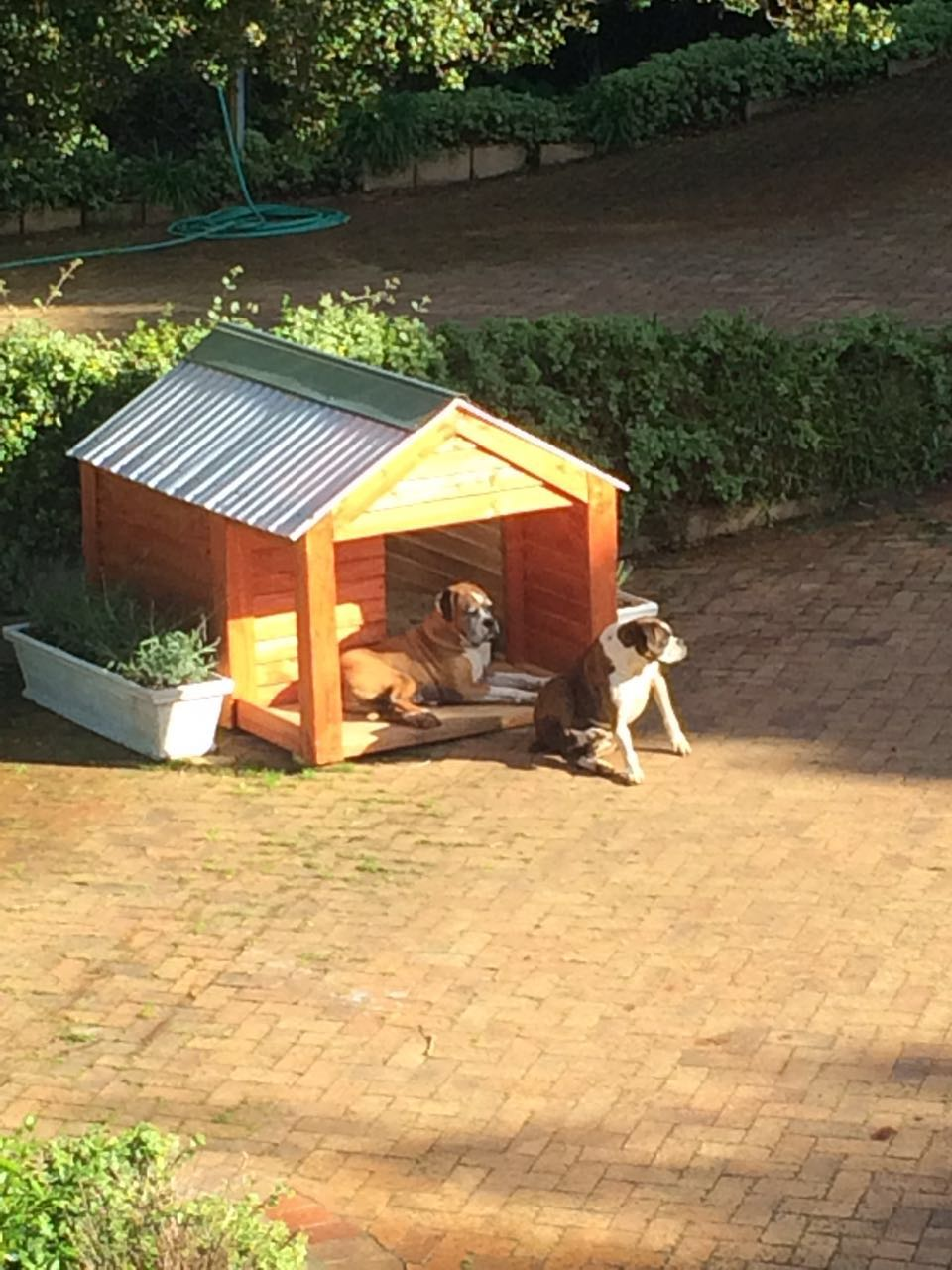 Home Cape Town Dog Kennels
